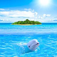 Tablou canvas delfin (4)